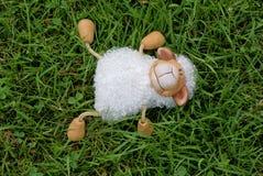 πρόβατα δεσποινίδας Στοκ Εικόνες