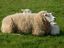 Πρόβατα και παιδιά μητέρων Στοκ φωτογραφία με δικαίωμα ελεύθερης χρήσης