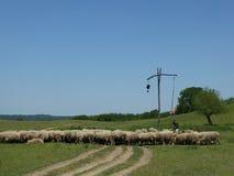 Πρόβατα και ποιμένας στο παλαιό σκούπισμα καλά Στοκ Εικόνες