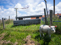 Πρόβατα και laundy στον αέρα Στοκ εικόνες με δικαίωμα ελεύθερης χρήσης