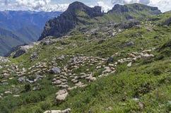 Πρόβατα κατά τη βοσκή σε ένα λιβάδι βουνών Στοκ εικόνα με δικαίωμα ελεύθερης χρήσης