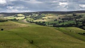 Πρόβατα κατά τη βοσκή στους κυλώντας λόφους της βρετανικής επαρχίας απόθεμα βίντεο