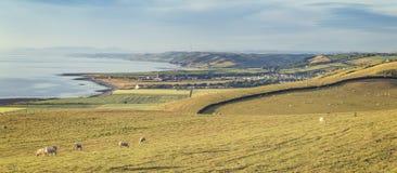 Πρόβατα κατά τη βοσκή στους παράκτιους λόφους στην Ουαλία, UK στοκ εικόνες