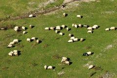 πρόβατα λιβαδιών βουνών κοπαδιών Στοκ φωτογραφίες με δικαίωμα ελεύθερης χρήσης