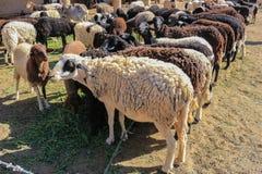 Πρόβατα μαλλιού για την πώληση στοκ φωτογραφία με δικαίωμα ελεύθερης χρήσης