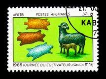 Πρόβατα προβάτων της Μποχάρας (Ovis ammon aries) και sheepskins, serie, circa 19 Στοκ Εικόνες