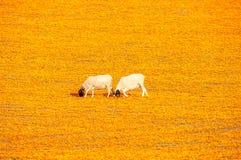 Πρόβατα σε έναν τάπητα των λουλουδιών Στοκ εικόνες με δικαίωμα ελεύθερης χρήσης