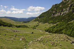 Πρόβατα σε ένα λιβάδι Στοκ φωτογραφίες με δικαίωμα ελεύθερης χρήσης
