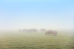 Πρόβατα στην υδρονέφωση Στοκ Φωτογραφία