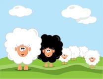 Πρόβατα στον τομέα ελεύθερη απεικόνιση δικαιώματος