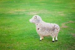 Πρόβατα στο αγρόκτημα Στοκ Φωτογραφίες