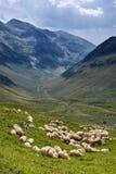 Πρόβατα στο βουνό Στοκ Εικόνα