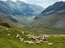 Πρόβατα στο βουνό Στοκ Φωτογραφία