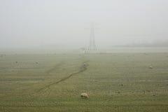 Πρόβατα στο λιβάδι ή ένα misty τοπίο πόλντερ Στοκ φωτογραφία με δικαίωμα ελεύθερης χρήσης