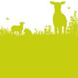 Πρόβατα στο λιβάδι διανυσματική απεικόνιση