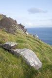 Πρόβατα στο κεφάλι Slea, Dingle χερσόνησος Στοκ εικόνες με δικαίωμα ελεύθερης χρήσης