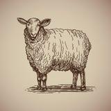 Πρόβατα στο ύφος σκίτσων Απεικόνιση αποθεμάτων