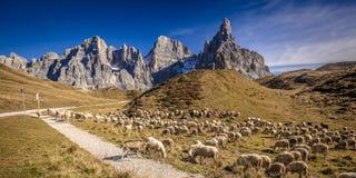 Πρόβατα στο passo rolle στοκ εικόνα