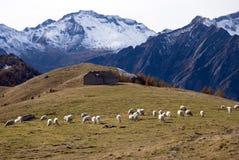 πρόβατα τοπίων φθινοπώρου Στοκ Φωτογραφίες