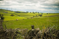 πρόβατα cumbria στοκ εικόνες