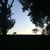 Πρόβατα Silhouet Στοκ Φωτογραφίες
