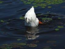 πρόγευμα μασουριών Στοκ εικόνες με δικαίωμα ελεύθερης χρήσης