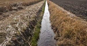 πρόοδος γεωργίας Στοκ Εικόνα