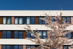 Πρόσοψη του σύγχρονου κτιρίου γραφείων με το ανθίζοντας δέντρο μηλιάς άνοιξη Στοκ Εικόνα