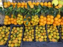 Πρόσφατα επιλεγμένα πορτοκάλια Στοκ Φωτογραφία