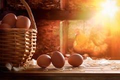 Πρόσφατα επιλεγμένα αυγά στο καλάθι με το κοτόπουλο μέσα στο κοτέτσι backg στοκ εικόνες