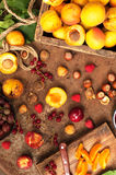 Πρόσφατα επιλεγμένα βερίκοκα Οργανικά βερίκοκα στον πίνακα μετάλλων βερίκοκα σε ένα κλουβί Στοκ φωτογραφίες με δικαίωμα ελεύθερης χρήσης