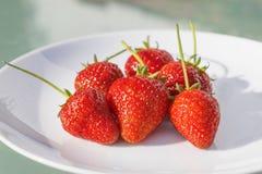 Πρόσφατα επιλεγμένες ώριμες φράουλες που εξυπηρετούνται σε ένα άσπρο πιάτο Στοκ φωτογραφία με δικαίωμα ελεύθερης χρήσης