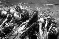 Πρόσφατα επιλεγμένη συγκομιδή των κρεμμυδιών Υπόβαθρο μονοχρωματικός στοκ φωτογραφία