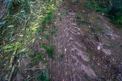 Πρόσφατα καλλιεργημένος οργανικός τομέας καλαμποκιού για τη βιομάζα στοκ φωτογραφίες
