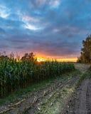 Πρόσφατα καλλιεργημένος οργανικός τομέας καλαμποκιού για τη βιομάζα στο νεφελώδες θερινό βράδυ με τα χρώματα ηλιοβασιλέματος - έν στοκ εικόνες με δικαίωμα ελεύθερης χρήσης