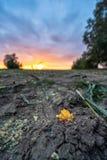 Πρόσφατα καλλιεργημένος οργανικός τομέας καλαμποκιού για το θερινό βράδυ βιομαζών με τα χρώματα ηλιοβασιλέματος, δραματικός ουραν στοκ εικόνα με δικαίωμα ελεύθερης χρήσης