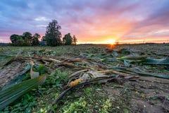 Πρόσφατα καλλιεργημένος οργανικός τομέας καλαμποκιού για το θερινό βράδυ βιομαζών με τα χρώματα ηλιοβασιλέματος, δραματικός ουραν στοκ φωτογραφία με δικαίωμα ελεύθερης χρήσης