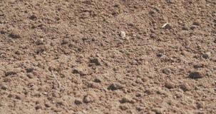 Πρόσφατα καλλιεργημένος τομέας Υπόβαθρο γεωργίας φιλμ μικρού μήκους