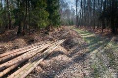 Πρόσφατα κόψτε τα κούτσουρα δέντρων Στοκ εικόνα με δικαίωμα ελεύθερης χρήσης