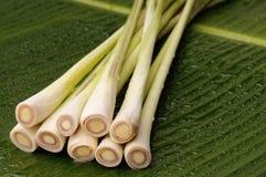 Πρόσφατα κόψτε lemongrass Στοκ Εικόνα