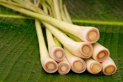 Πρόσφατα κόψτε lemongrass Στοκ Φωτογραφίες