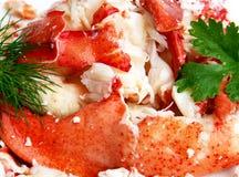 Πρόσφατα μαγειρευμένος αστακός Στοκ φωτογραφίες με δικαίωμα ελεύθερης χρήσης
