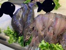Πρόσφατα πιασμένα ψάρια στον πάγο στοκ φωτογραφίες