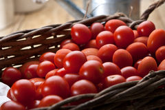 Πρόσφατα πλυμένες ντομάτες αμπέλων Στοκ εικόνα με δικαίωμα ελεύθερης χρήσης