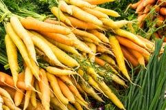 Πρόσφατα συγκομισμένα πορτοκαλιά καρότα στην παρουσίαση Στοκ φωτογραφίες με δικαίωμα ελεύθερης χρήσης