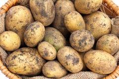 Πρόσφατα συγκομισμένες πατάτες στοκ εικόνα