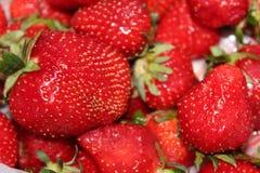 Πρόσφατα συγκομισμένες φράουλες στοκ φωτογραφία