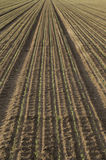 Πρόσφατα φυτευμένοι σπόροι στοκ φωτογραφίες