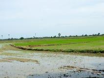 Πρόσφατα φυτευμένος ορυζώνας ρυζιού Στοκ φωτογραφία με δικαίωμα ελεύθερης χρήσης