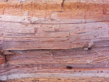 Πρόσφατα χωρίστε το ξύλο Στοκ εικόνες με δικαίωμα ελεύθερης χρήσης